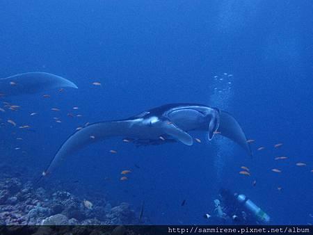 maldives 502.JPG