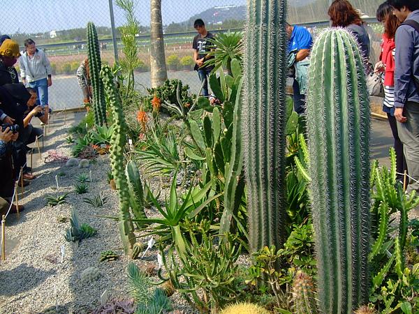 沙漠植物區的名字都很特別