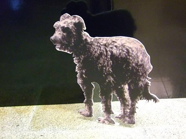 可愛的牧羊犬