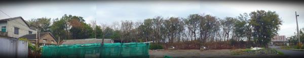 大城鷺鷥林