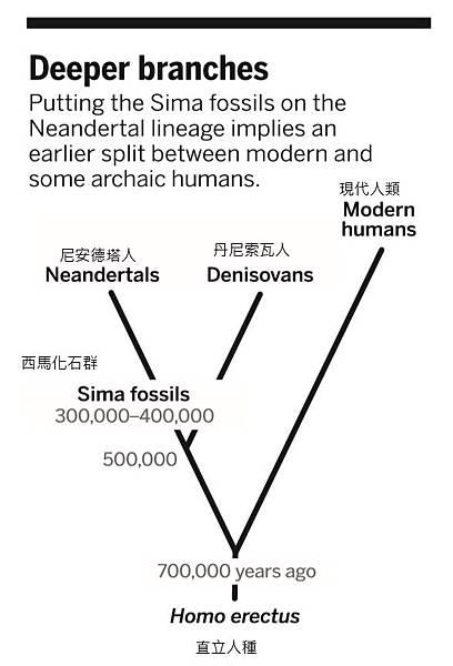 Human branches.jpg