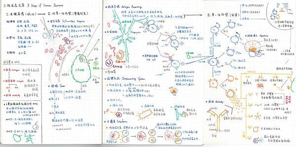 14.Immune System.jpg
