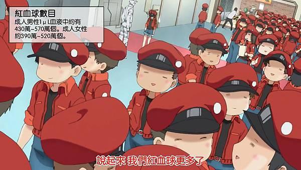 24紅血球數量.jpg