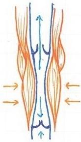 6.Circulatory System (4)_LI.jpg