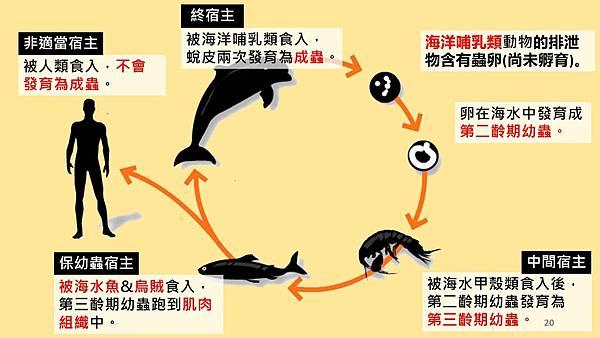 海獸胃線蟲cycle.jpg