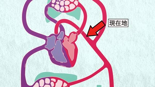 2 主動脈.jpg