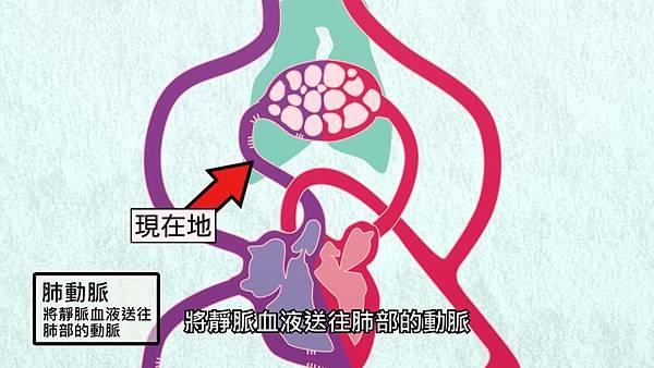 2 肺動脈.jpg