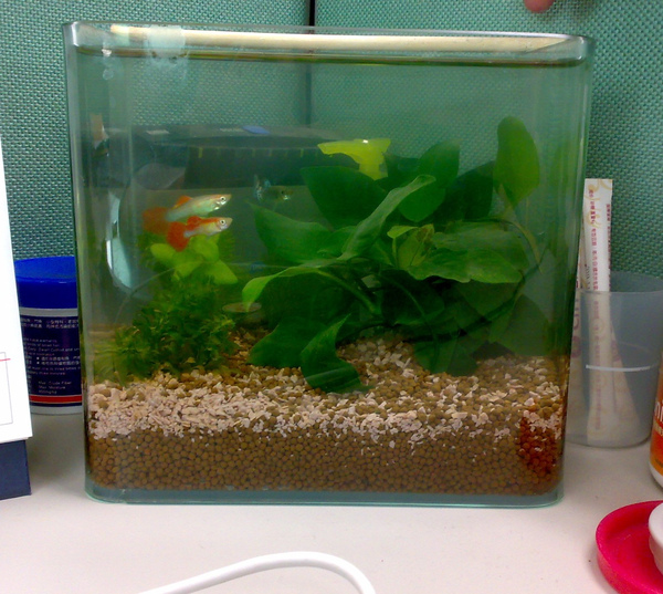 office fish.jpg