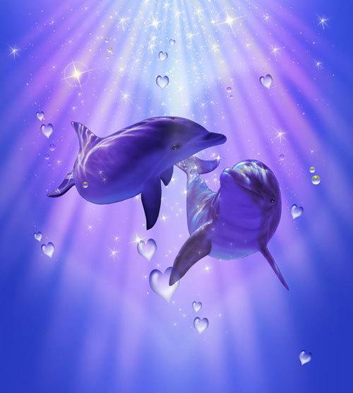 DolphinLove