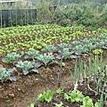 劉力學的有機蔬菜園.jpg