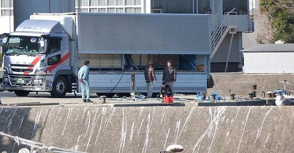 日本渔民囚禁大量海豚7.jpg