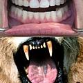 牙齒2.jpg