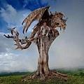 朽木可雕也 2.jpg