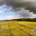 20160616 英國威爾特郡麥田圈2