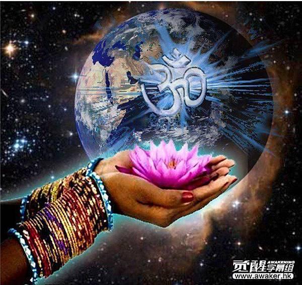 The Lotus Flower 蓮花.jpg