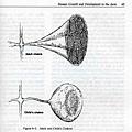 認識脈輪7個生命的階段-脈輪的狀態.jpg