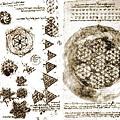 達芬奇學習並研究了生命之花2.jpg