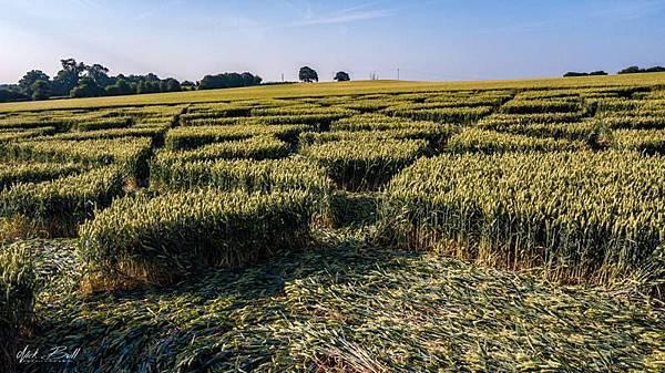 2018-7-7 英國威爾特郡引發真假爭議的麥田圈9.jpg