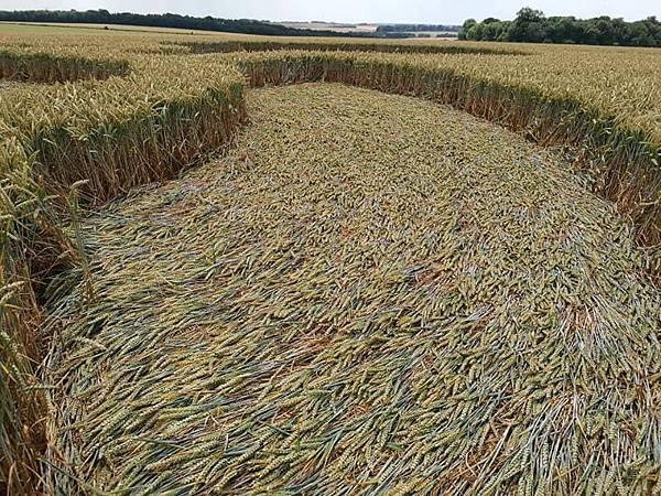 2018-7-8 英國威爾特郡警告意味濃厚的麥田圈11.jpg