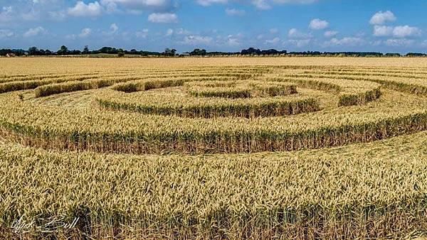 2018-7-14 英國威爾特郡宛如輻射狀的麥田圈9.jpg