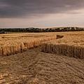 2018-7-21 英國威爾特郡如12瓣紙風車的麥田圈5.jpg