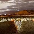 Werner Jaisli在阿根廷北部的沙漠區建造了一座專供UFO起降之用的機場5.jpg
