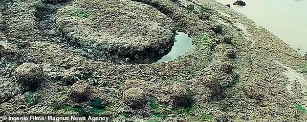 南西班牙安達盧西亞加迪斯北部海灘上的一個石頭物體的特寫.jpg