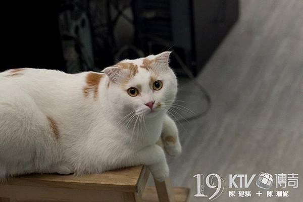 附加片廠養的貓-------饅頭玉照一張