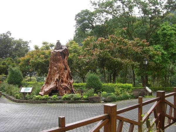 知本森林遊樂區內,有很多關於猴子的塑像