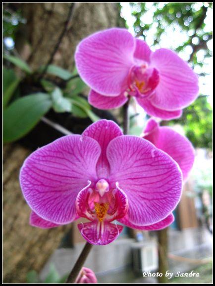 蘭花.jpg