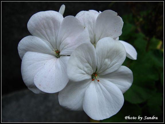 小白花.jpg