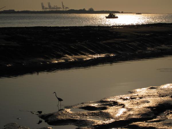 白鷺鷥與夕陽,滿有意境~