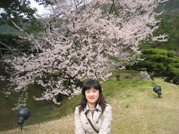 又一棵盛開的櫻花樹