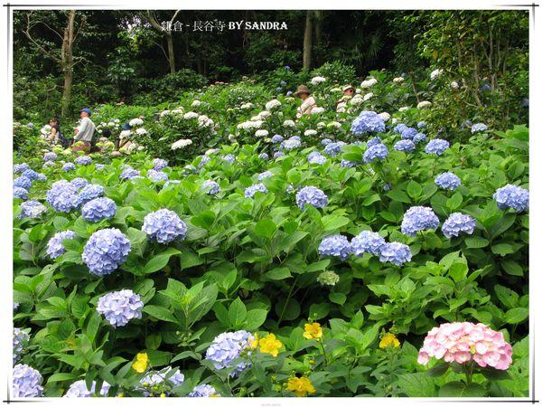 日本自由行 342.jpg