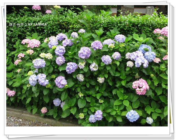 日本自由行 390.jpg