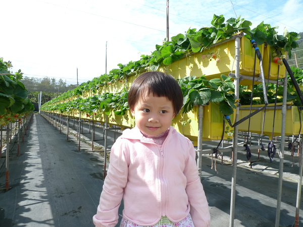 草莓園到了!!