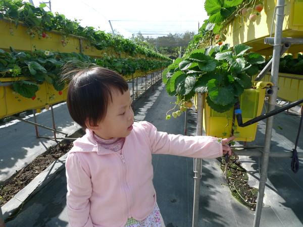 有草莓的小花喔~