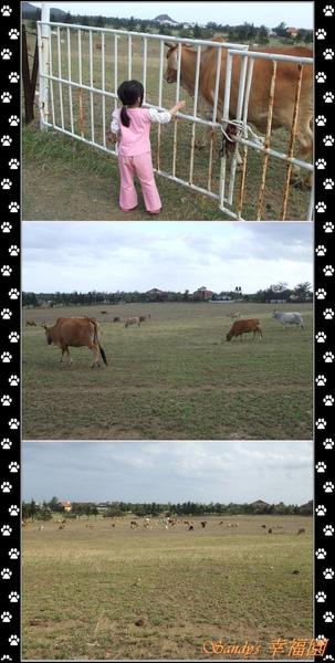 15墾丁牧場.jpg