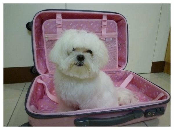 粉紅行李箱.jpg