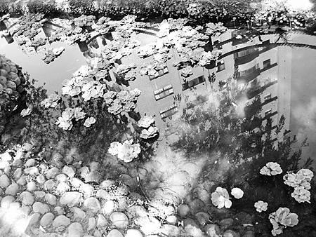 小池塘裡的房 .jpg