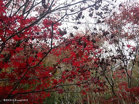 Photo 2020-11-13, 12 03 51_batch.jpg