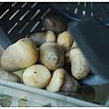 02煮草菇.jpg