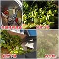 01炒衝菜.jpg