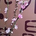 象山第一站杏花朵朵開1