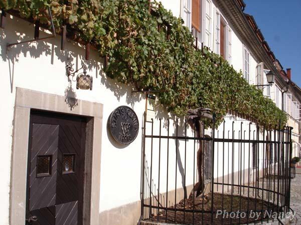 400年的古老葡萄藤