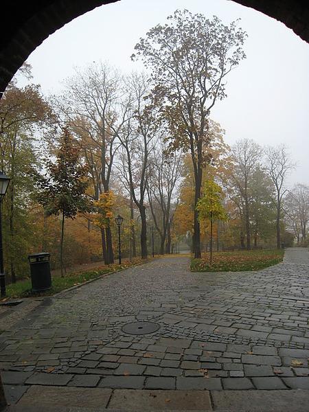 來城堡的路會經過一大片森林