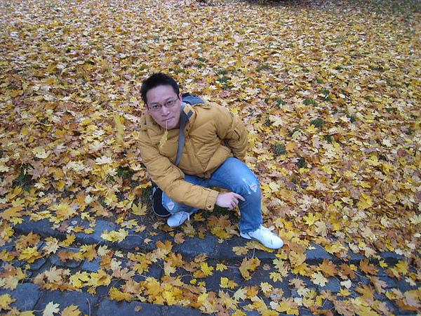 入秋了沿途都是落葉 很美