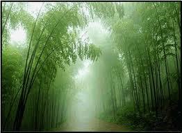 竹林7.jpg