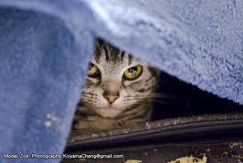 躲起來貓咪