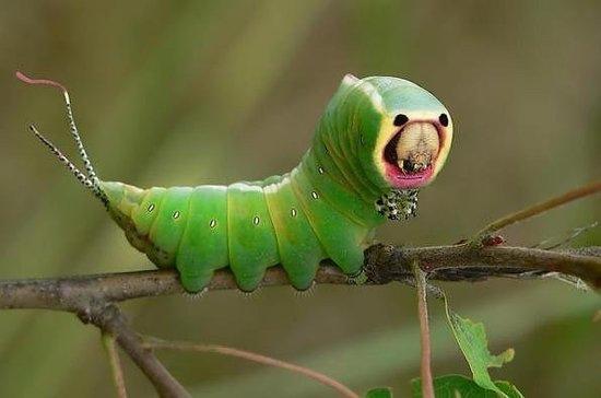 小毛蟲蠕動2